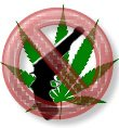 NO_marijuana-gun_thb